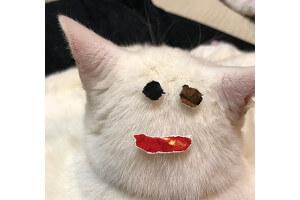 小雪猫3月変顔