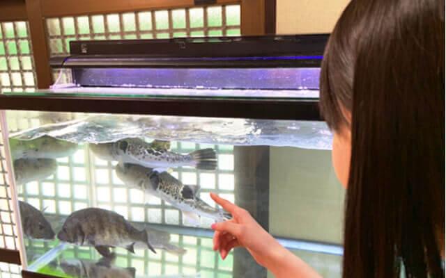 割烹大和の水槽の魚